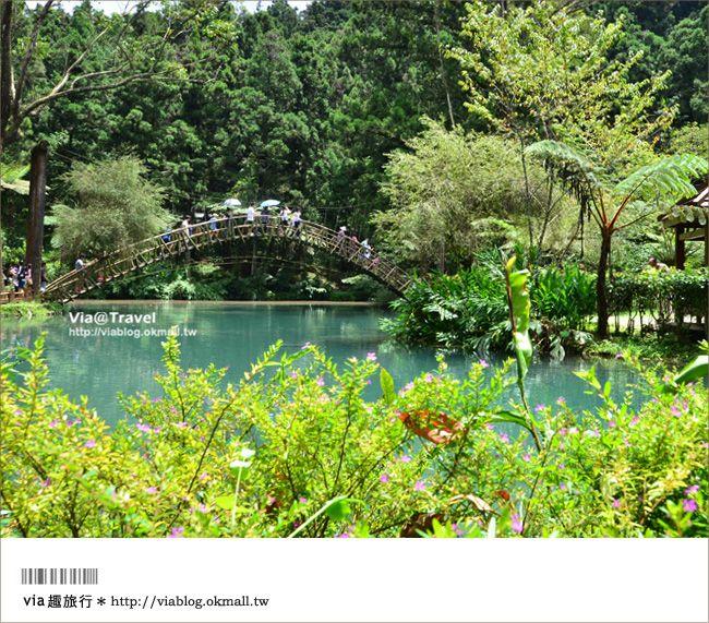 【溪頭森林遊樂區】溪頭一日遊~一起回味老森林的新魅力-Via's旅行札記