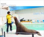 【小樽景點】小樽水族館~超多海洋動物的精彩表演!親子玩樂首選!