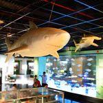 《13遊記》嘉義市立博物館~小心長毛象和白鯊出沒身邊!!