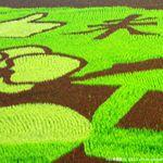 【2013台南好米嘉年華會】台南後壁區彩繪稻田,繪出農作之美