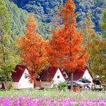 【武陵農場】武陵農場秋季限定~武陵農場落羽松《13遊記》