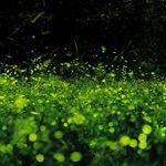 【全台賞螢活動】春夏限定螢光晚會~螢火蟲怎麼拍(分享篇)《13遊記》