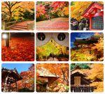【關西賞楓自由行】關西賞楓懶人包!大阪、京都、奈良|Via的紅葉美景全記錄♥ (目前收集28個,持續更新中)