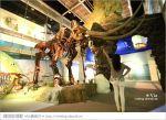 【台南南科景點】樹谷生活科學館~超大的劍齒象化石!有趣又能長知識的博物館!