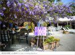 【阿喜紫藤】嘉義瑞里民宿‧阿喜紫藤民宿下午茶~山城中浪漫的紫色花園