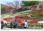 【2009陽明山花季】2009陽明山花季活動內容及交通資訊