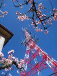 【2009阿里山櫻花季】2009阿里山櫻花季活動內容-賞櫻最佳路線