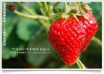 【苗栗旅遊】三義旅遊薑麻園休閒園區~雲洞仙居採草莓