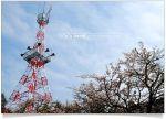 【阿里山賞櫻】阿里山櫻花季賞櫻旅之二~阿里山派出所