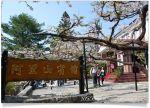 【阿里山櫻花季】阿里山住宿飯店~阿里山賓館櫻花