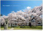【日本關西行】2009年*Via的京都大阪追櫻之旅
