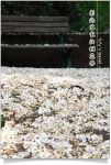 【2009桐花祭】2009客家桐花祭~全台賞桐活動整理