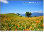 【花蓮金針花季】花蓮六十石山金針花~超美如畫的金針花海!