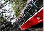【2010阿里山櫻花季】2010阿里山櫻花季活動內容-賞櫻最佳路線