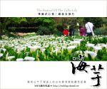 【2010竹子湖海芋季】陽明山竹子湖海芋季~海芋盛開囉!