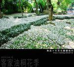 【2010客家桐花祭】南投客家桐花祭~牛耳石雕藝術村賞桐花