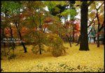 【Via京都賞楓】Day4●此行最美的楓紅在南禪寺及永觀堂