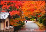 【Via京都賞楓】Day6●2010賞楓情報~京都嵐山,紅葉正紅!