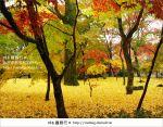 【京都賞楓必去】跟著Via賞楓趣*又見爆紅的美景~京都永觀堂