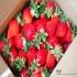 馬拉邦山採草莓