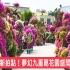 輝豐園藝九重葛花園